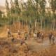 L'aide mutuelle et l'assistance dans la culture tchétchène