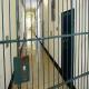 Çeçen Sığınmacı Avusturya Hapishanesinde Öldü